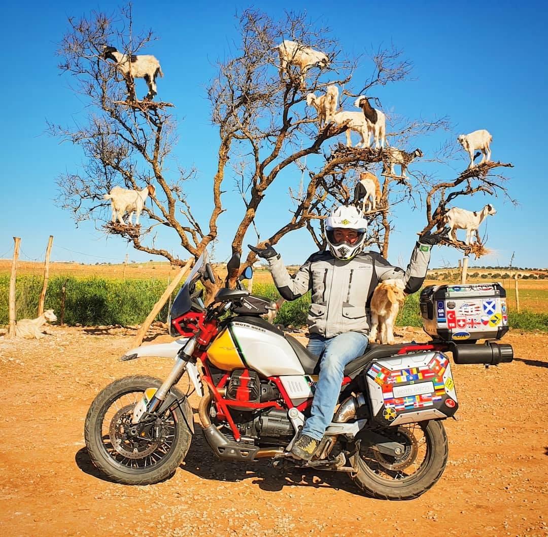 Мото отбивки: Дървесните кози в Мароко